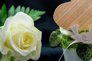 flower-3087668