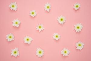 white-and-yellow-flower-on-pink-wall-1037994 (1)